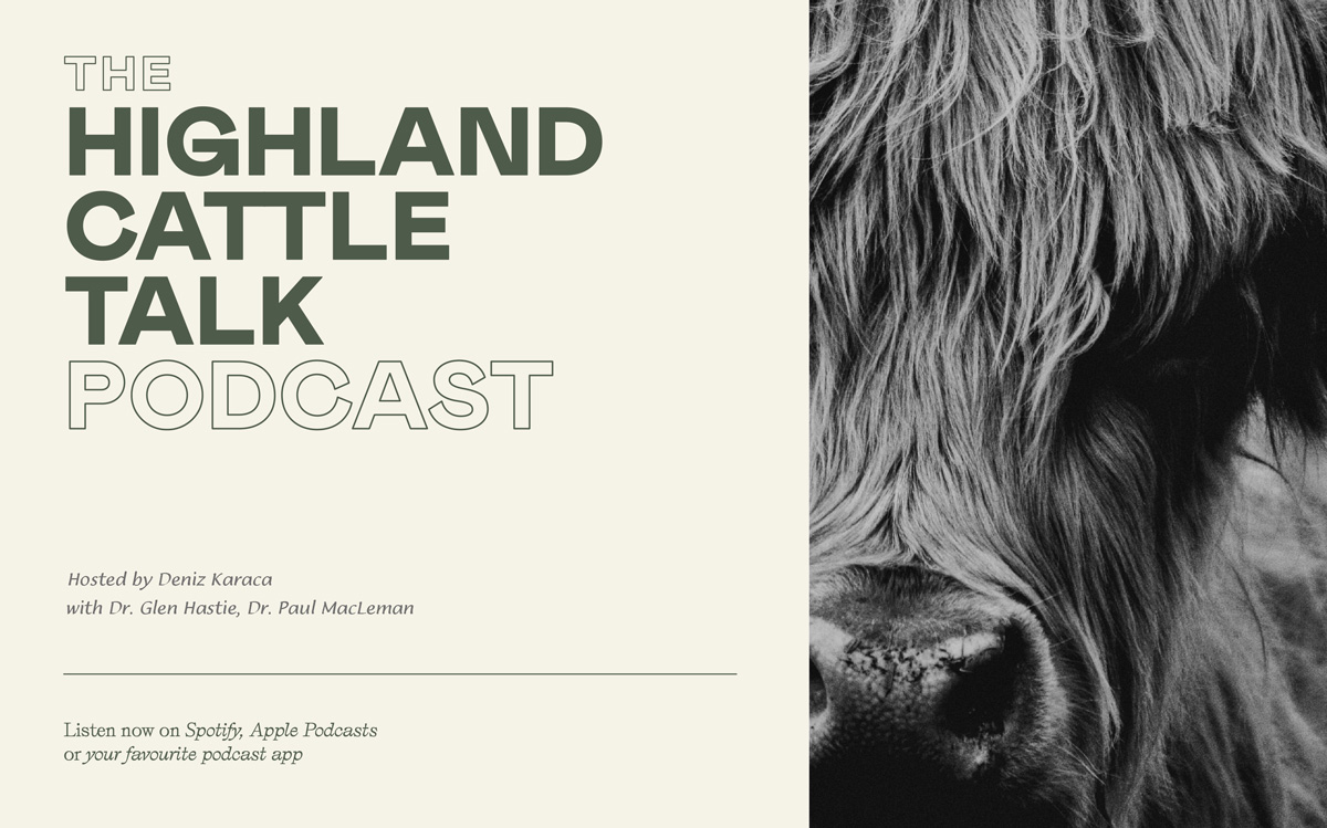 Highland Cattle Talk Podcast Logo